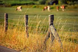 Hd Wallpaper Fence Post Barbed Wire Barrier Keep Out Meadow Pasture Wallpaper Flare