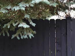 Fence Staining Daniel Kanter