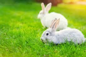 How To Rabbit Proof Your Garden Burgess Pet Care