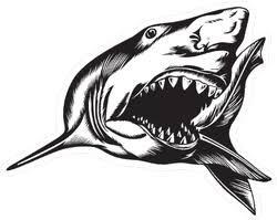 Shark Car Decals Stickers Shark Bumper Stickers