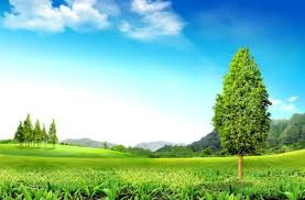 green nature hd pictures free stock