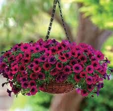 december season flowers 5 indian blooms