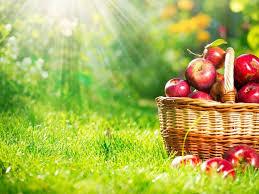 Яблочный спас в 2020 году
