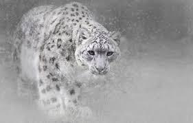 wallpaper winter cat snow snow