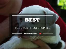 best dog food for pitbull puppies
