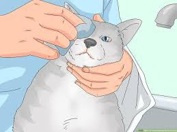 4 ways to treat watery eyes in cats