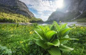 Hình nền : 1600x1032 px, Alps, Áo, rừng, phong cảnh, Núi, thiên ...