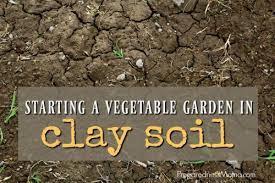 vegetable garden in clay soil