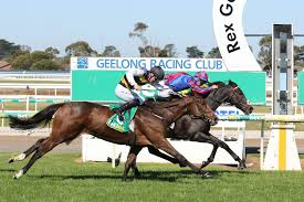Geelong Cup 2020 Field, Tips, Betting ...
