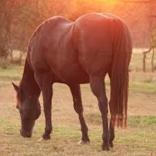 Image result for Horse Supplements - The Best Techniques In Making Them Last Longer