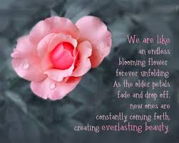 forever unfolding rose quotes flower quotes w quotes