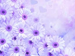 still quotes flowers background x for your