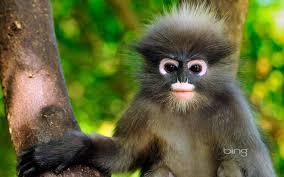 cute monkey wallpapers on wallpapersafari