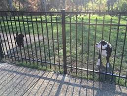Yard Dog Fence Of Nashville Fence Contractor Local Nashville Fence Company