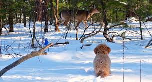 The Official Website Of Invisible Fence Brand Dog Fences The Invisible Fence Brand