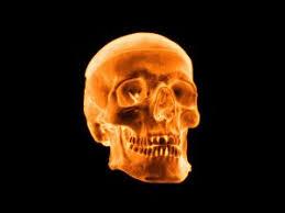 3d skull wallpaper 11512