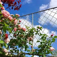 Trellis Garden Requisites