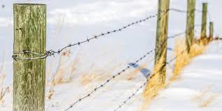 When Selecting Optimal Fence Consider Cost Per Foot American Cattlemen Fencing Fencing Tips Cattle Steel Fence Barb Wire Fence