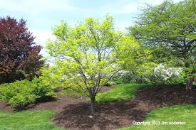 screening trees for small gardens nz