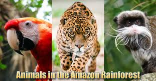 Animals In The Amazon Rainforest: Pictures, Info & Facts