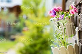 Detail Of Hanging Flower Pots On Fence Stock Photo Download Image Now Istock