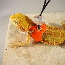 lizard harness leash baby size