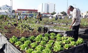 feeding africa s growing cities spore