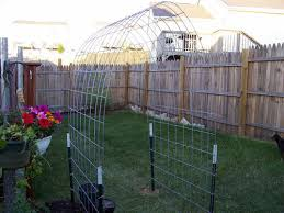 Built My First Cattle Panel Arch Trellis Today
