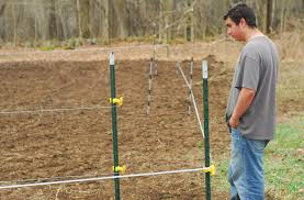food plots with an electric fence