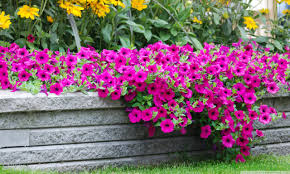 moril beautiful flowers ultra hd