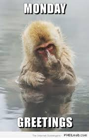 funny monkey meme pictures and images
