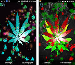 weed rasta live wallpaper apk