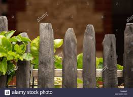 Low Grey Coloured Wooden Picket Fence With A Green Leaved Shrub Growing Into It Enclosing A Small Front Garden In Fremantle Perth Western Australia Stock Photo Alamy