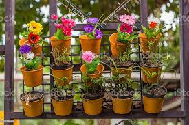 Colorful Flowers In Wall Flower Pots Stock Photo Download Image Now Istock