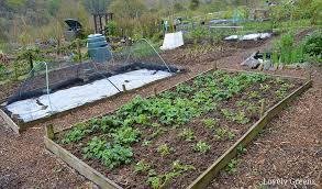 create wood chip garden paths