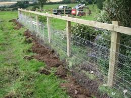 Chicken Wire Mesh Protects Your Everything In Garden