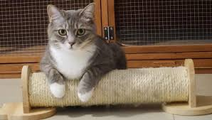 scratching post for british shorthair