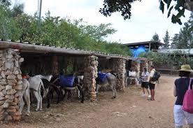donkeys picture of kfar kedem