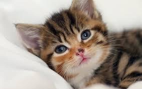 Rüyada kedi görmek: Rüya Tabirleri Yorumları