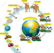 Niveles De Organización De La Vida Silvestre En La Tierra ...
