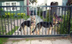 Installing Safe And Affordable Fencing For Dogs Whole Dog Journal