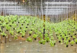 how to start hydroponic gardening