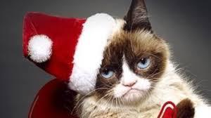grumpy cat christmas background