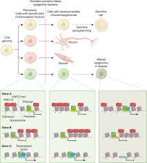 advances in epigenetics link genetics