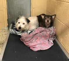 JuneBug and Lester are still waiting for... - Voorhees Animal ...