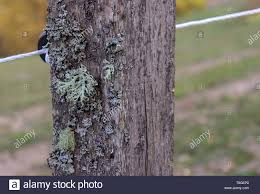 Old Wooden Rustic Fence Post With Moss Wires And A Green Country Field Behind Stock Photo Alamy