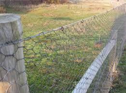 Rabbit Netting Galvanised Steel Rabbit Proof Fencing