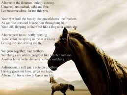 a beautiful equine