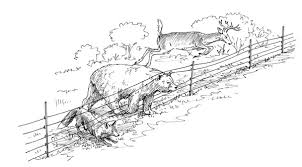 Fitting The Fence To The Animal Choosing The Best Electric Fence For Your Needs Storey Publishing