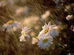 صور ورد تحت المطر